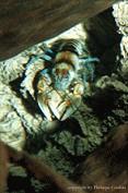 Krebse im Aquarium