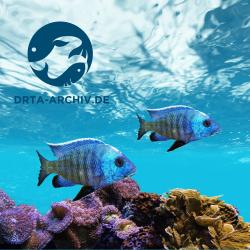 Aquarium und Zierfische
