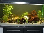 Neu bepflanztes 200 Liter Aquarium