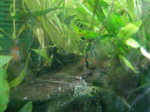 aquarium wasser trüb braun