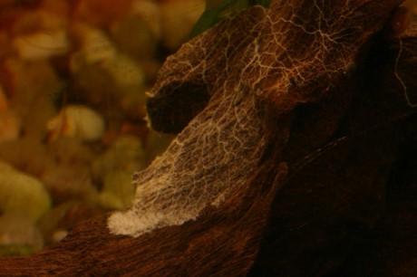 algen infos zu schleimpilzen drta ratgeber. Black Bedroom Furniture Sets. Home Design Ideas