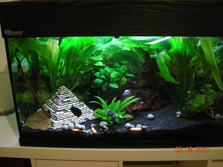 schnecken im aquarium alle infos und details. Black Bedroom Furniture Sets. Home Design Ideas