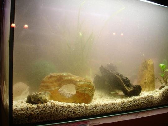 einfahren eines aquariums nach ersteinrichtung alle infos und tipps. Black Bedroom Furniture Sets. Home Design Ideas