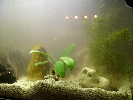 aquarium richtig einfahren
