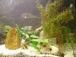 Die Trübung im Aquarium geht zurück