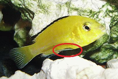 Abmagerung Bei Fischen Und Zierfischen Alle Infos Und Details