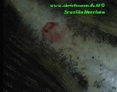 Verletzter Prachtflossensauger