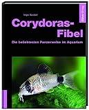 Corydoras-Fibel - Alles rund um Panzerwelse