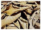 Walnussblätter 20 Stück