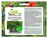 Stk - 15x Aquarium Fissidens fontanus Phoenix Moos Pflanzen - Samen #313 - Seeds Plants Shop Samenbank Pfullingen Patrik Ipsa