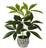 *Flair Flower, grün, Schefflera im Übertopf aus Wasserhyazinthe, Kunst, Seidenblumen, Real Touch, Kunstpflanzen, Pflanzen künstlich, Dekopflanze, groß, 48x30 cm