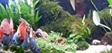 *Mühlan Wasserpflanzen Sortiment für Diskus, südamerikanische, temperaturbeständige Aquariumpflanzen + Wasserpflanzendünger