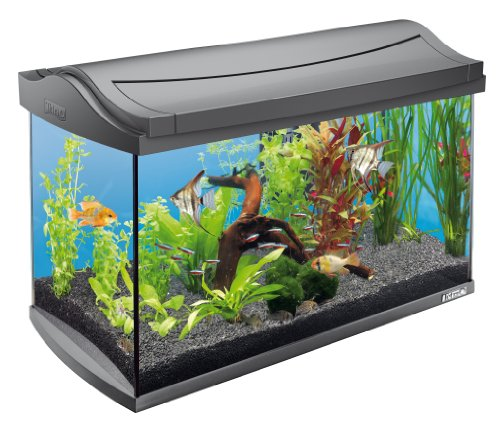 Tetra AquaArt Aquarium-Komplett-Set Tropisch 60 L, anthrazit