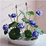 *Ferry Heiße 5 PC/Bag Bonsai Wasser-Hyazinthe Blumen Pflanzen Neue Live-Wasser-Hyazinthe Schwimmteich Aquarium Fissidens fontanus