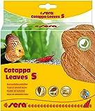 sera Catappa Leaves Seemandelbaumbltter verschiedene Gren Garnelenfutter & Krebsfutter - frdern die Laichbereitschaft von Fischen & Garnelen, sie beugen bakteriellen Infektionen & Verpilzungen vor