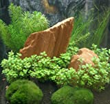 *Mühlan - Anti-Algen-Set, 5 schnellwachsende Pflegeleichte Sorten + 2 Mooskugeln