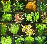*150 Wasserpflanzen XXL Set, Dünger, Aufbereiter, Aquariumpflanzen für alle Bereiche, Aquarienpflanzen in rot und grün, 22 Bund