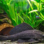 240 Liter Aquarium - Leitfaden und Besatzbeispiele