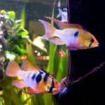 Anpassungsfähigkeit von Fischen