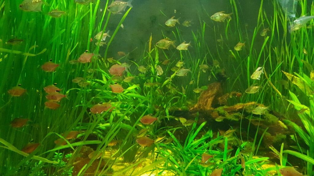 pflanzenwachstum im aquarium alle infos. Black Bedroom Furniture Sets. Home Design Ideas