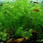 aquarium 1542893219