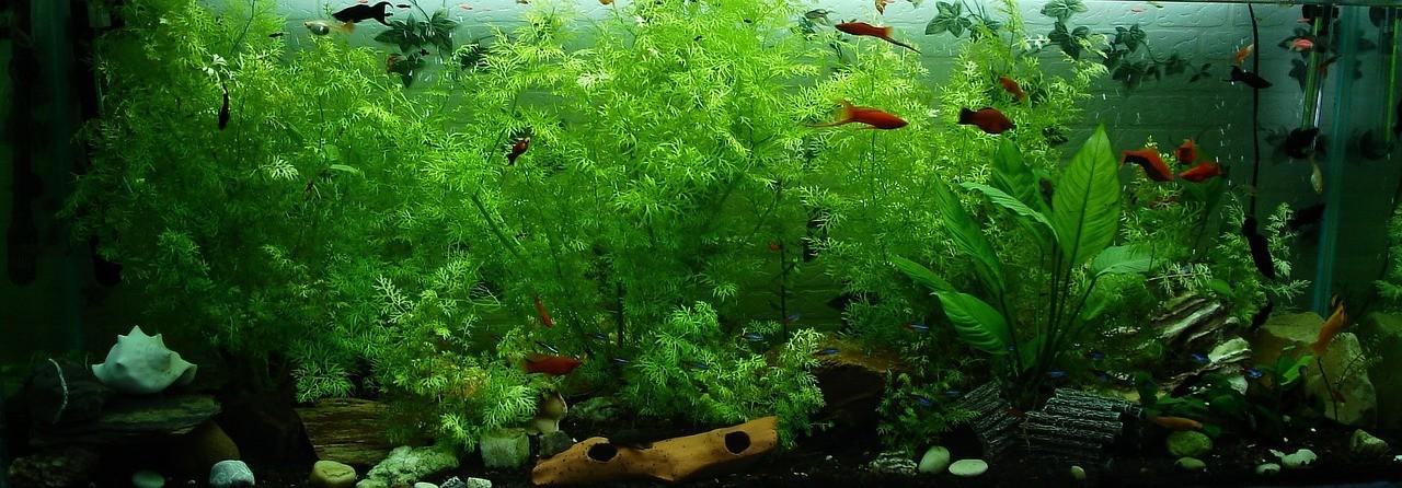 aquarium f r kinder geeignet ab welchem alter ist ein aquarium geeignet. Black Bedroom Furniture Sets. Home Design Ideas