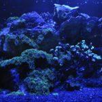 licht aquarium 1546639460