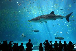 Rang 4: Georgia Aquarium