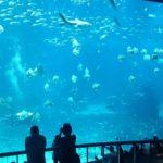 Rang 1: Chimelong Ocean Kingdom