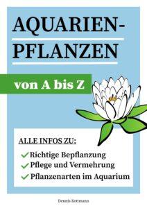 cover pflanzen