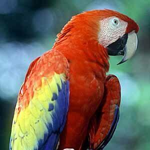 Papageien im Käfig
