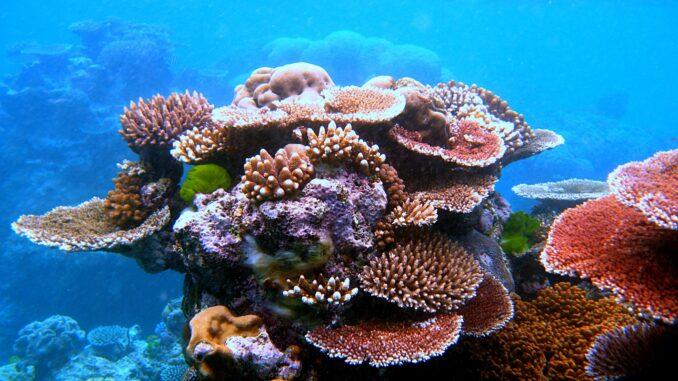 SPS Koralle