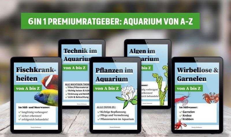 Aquarium von A-Z