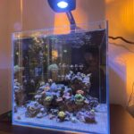 Nano Meerwasseraquarium
