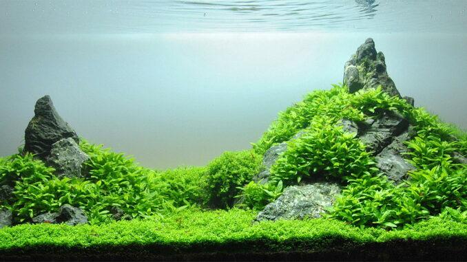 Aquascaping Berglandschaft